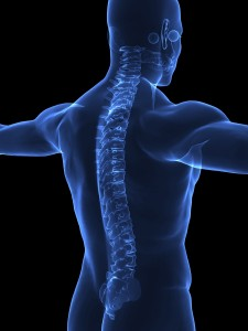 804472-human-spine-in-xray